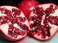 Pomegranate Flora
