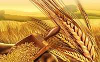 Wheat Flora