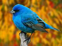 Bird Objects